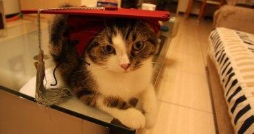 貓事。趣聞 | 畢業照