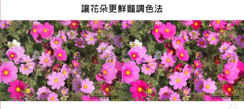 【PS教學】快速調色術-調整特定顏色讓花卉更鮮艷的方法-Photoshop教學修圖系列