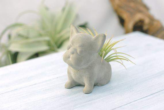 Concrete French Bulldog Sit Up Air Plant & Succulent Planter Small | Wedding Favors | Home Office Decor | Modern Planter