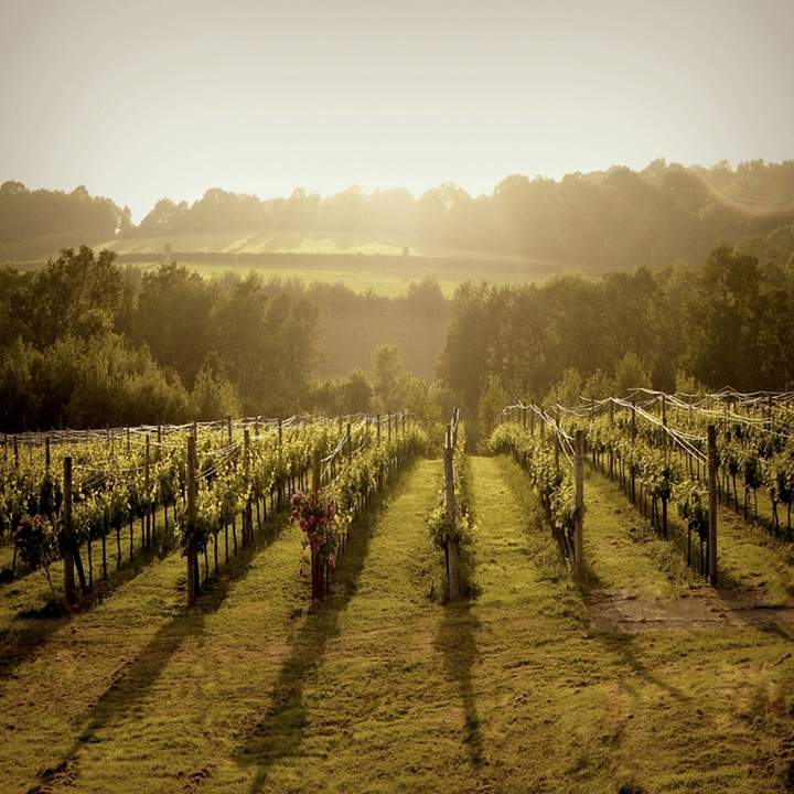 Red Letter Days - English Vineyard Tour And Tasting For Two Gift Experience