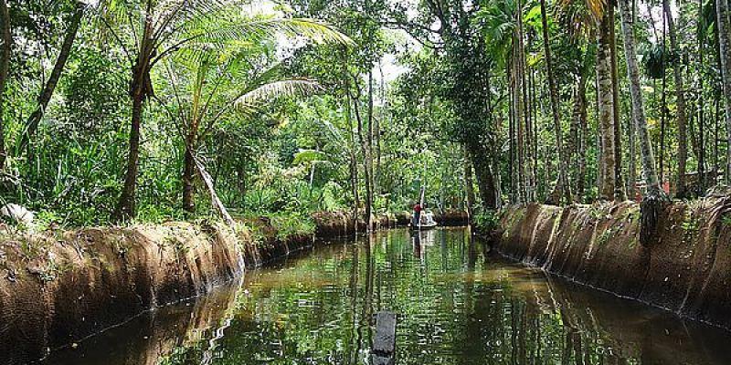 奇幻南印Day8 柯欽 Backwater 水鄉遊河 乘獨木舟一覽河岸風光