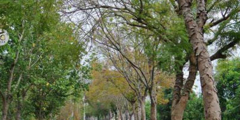 台中東勢。東豐。綠色走廊。騎鐵馬享受自在的慢活