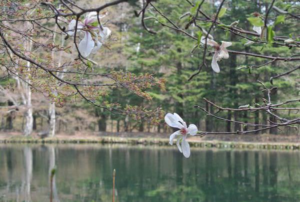長野。輕井澤。雲場池。巨人遺落的一塊淨土