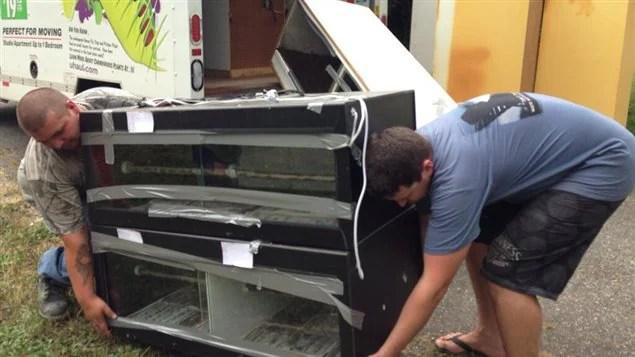 Le propriétaire de serpents Justin Clark déplace le reste de ses animaux, le samedi 17 août 2013 à Mission, en Colombie-Britannique. 46 pythons illégaux ont été euthanasiés sur place le jeudi précédent.