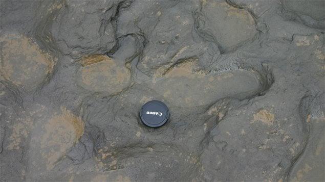 Les traces humaines trouvées sur la côte est de la Grande-Bretagne