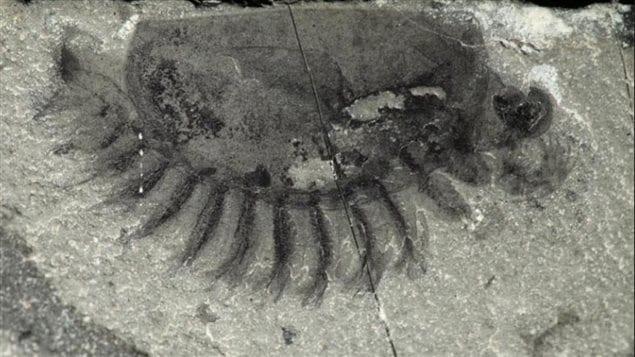 Une cinquantaine d'espèces ont été découvertes dans un gisement fossilifère dans le parc Kootenay en Colombie-Britannique.