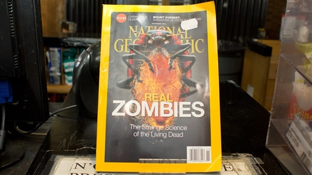 Les travaux du biologiste Jacques Brodeur ont fait la Une du magazine National Geographic en 2014.