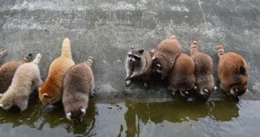花蓮 | 4大驚好玩體驗:溯溪跳水、兆豐農場、立川漁場撈蜆、賞鯨豚樂