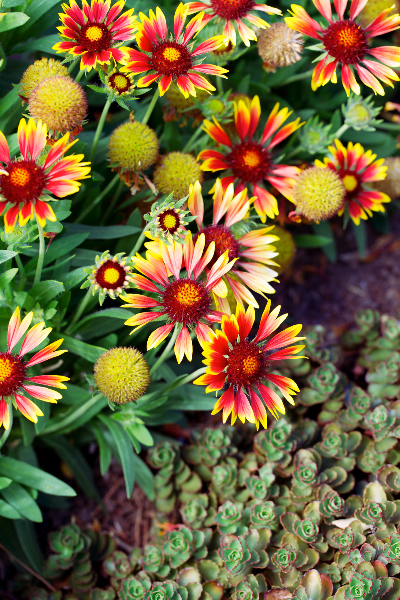 Dozens Of Water Wise Plants That Go Way Beyond Succulents