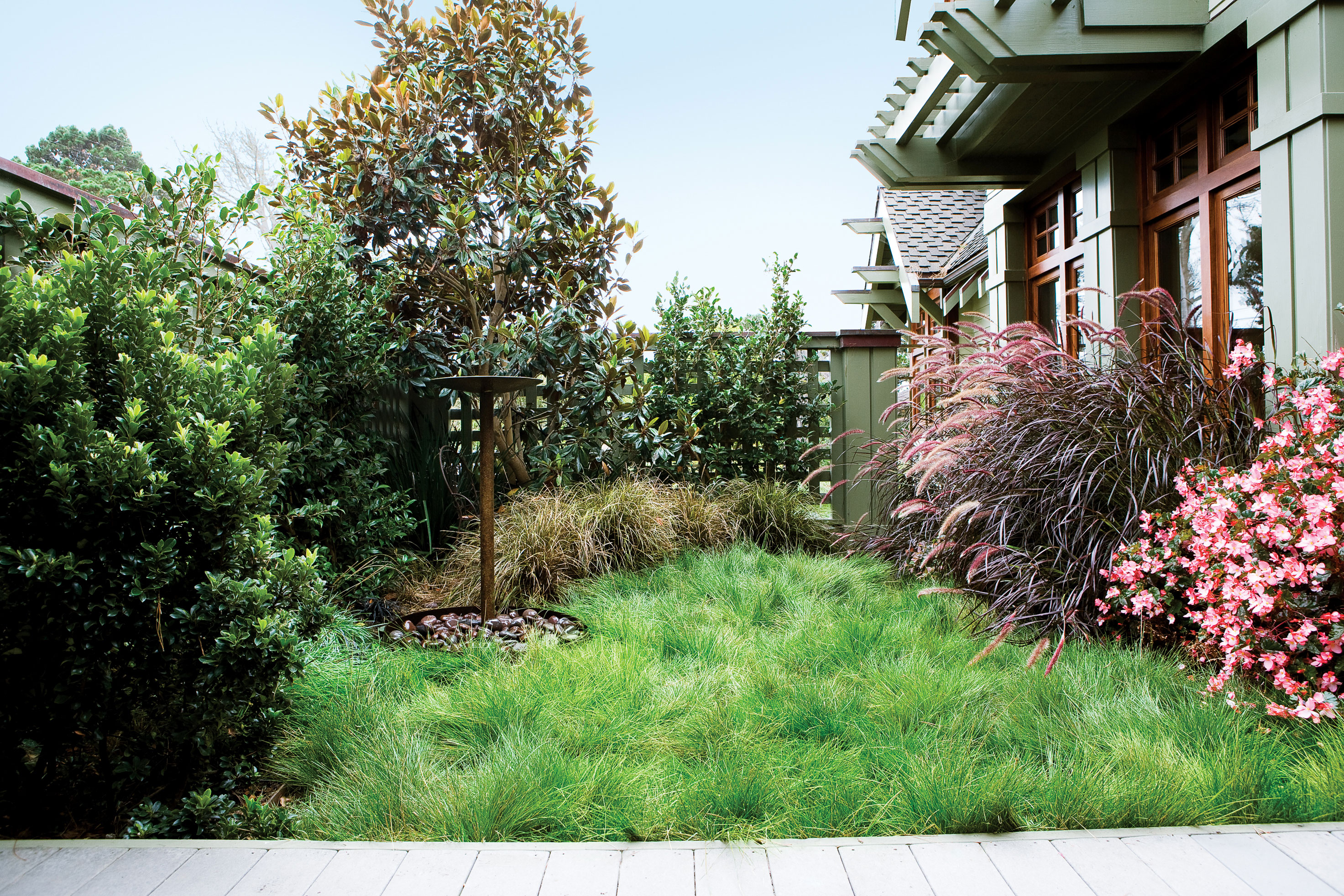 Plant a No-Mow Lawn - Sunset Magazine on No Mow Backyard Ideas id=96610