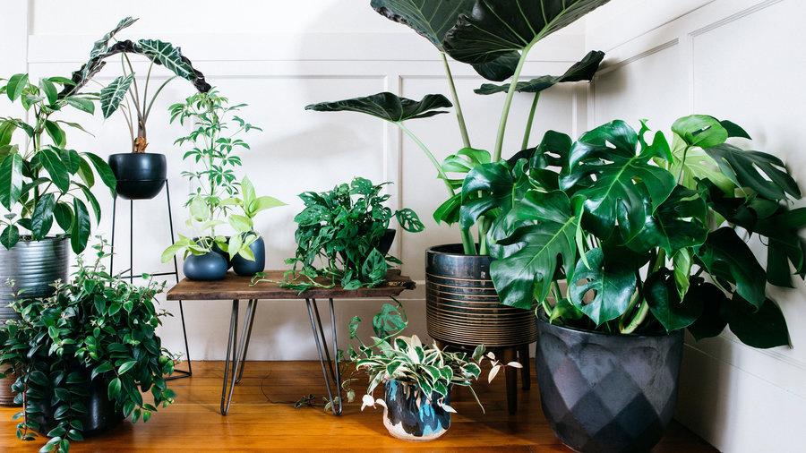 Designing With Potted Plants
