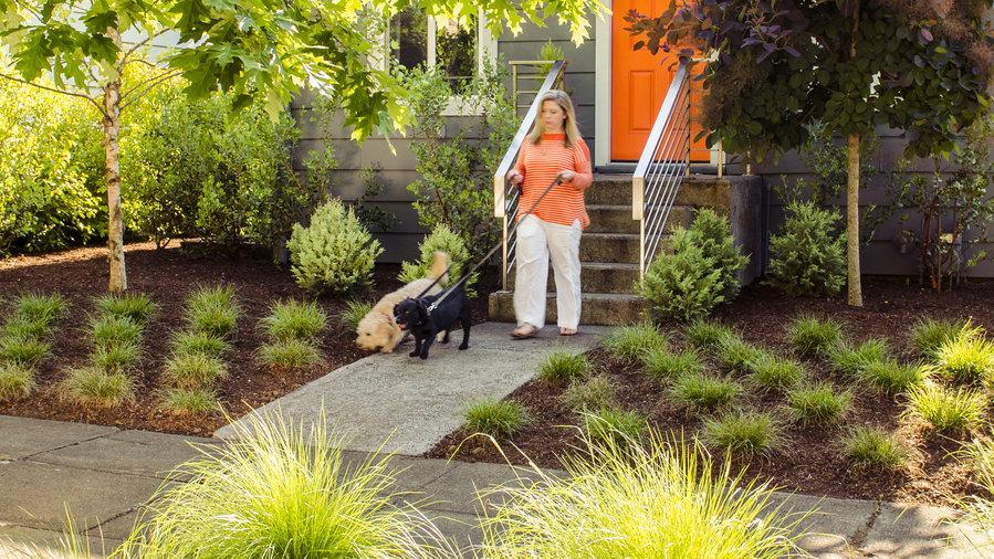 Backyard Ideas for Dogs - Sunset Magazine on No Mow Backyard Ideas  id=73479