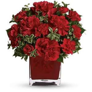 Symbolic Meaning of Carnation   Teleflora Shop for Carnations