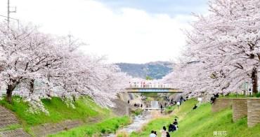 【日本遊記】奈良佐保川 關西賞櫻花景點推薦!在地人去的私房名所河櫻美翻了!