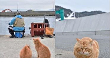 【九州福岡景點】相島 CNN評選世界六大貓島!前往交通方式、船班時間,冬天也推薦