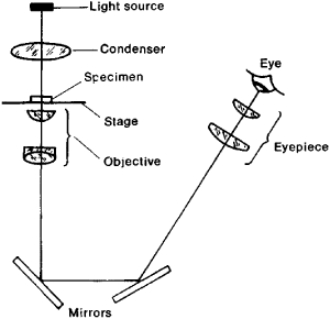 Inverted microscopes microscopegenius sans microscope this is the basic image of the path of light in an inverted microscope courtesy of thefreedictionary ccuart Image collections