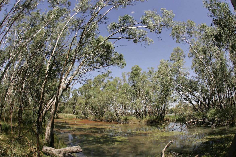 Murray Darling Basin In Crisis
