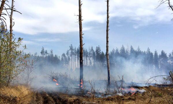 Fire burns in a forest in Luhansk region