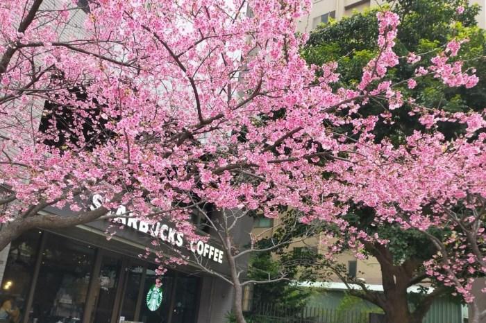 【期間限定】全台最粉味星巴克!到林口文化三路星巴克邊喝咖啡、邊賞櫻