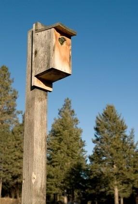 Recycled Birdhouse Ideas Thriftyfun