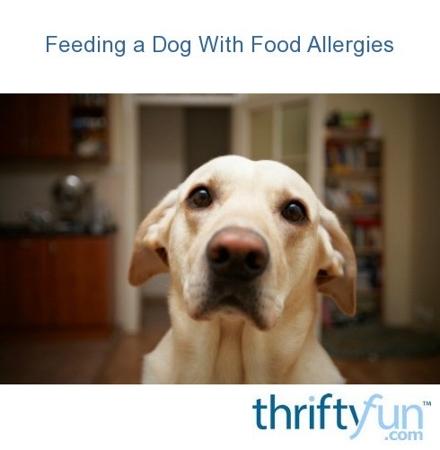 Image Result For Cortisone Shots For Dogs Allergies