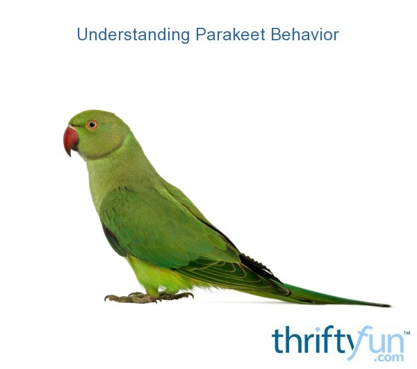 Understanding Parakeet Behavior ThriftyFun