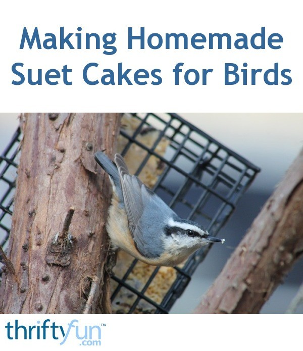 Making Homemade Suet Cakes For Birds Thriftyfun
