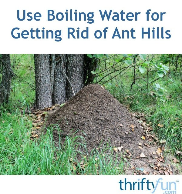 How To Get Rid Of Ant Hills Outside Introduction Kill Fire Ants And Commit