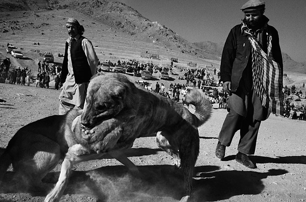 dogs of war photo essay