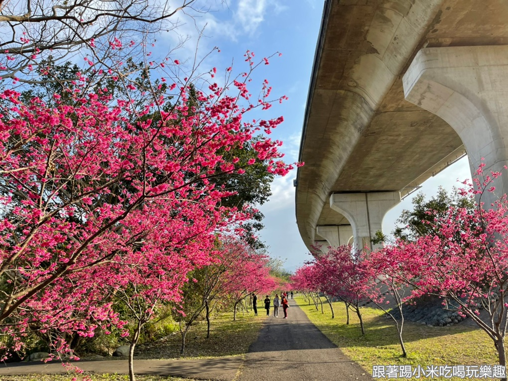 2021竹東河濱公園櫻花大道爆炸開了!不用去日本就可以漫步櫻花樹下浪漫氛圍~狗狗公園(怎麼去路線圖.停車資訊)