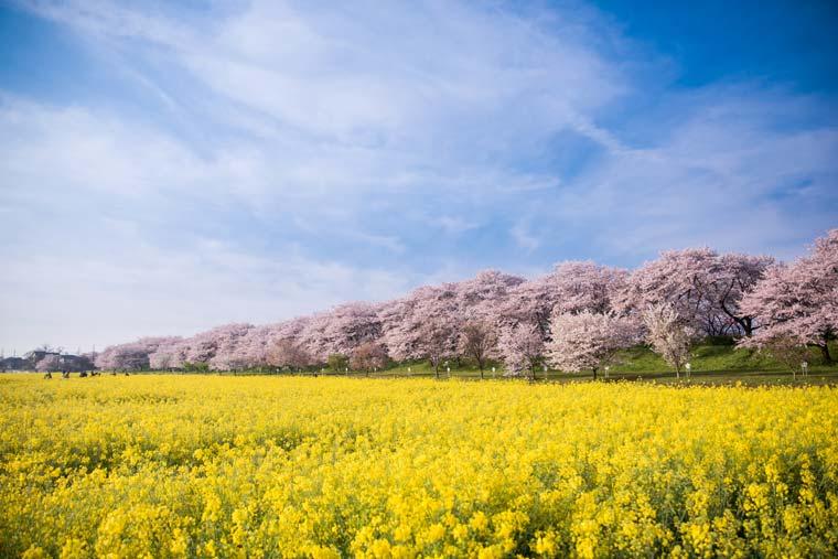 【2019年】今年見に行きたい!桜の名所・お花見スポット ...