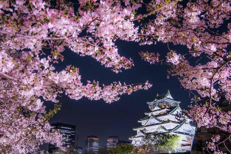 「大阪城公園2019桜の満開時期は?」の画像検索結果