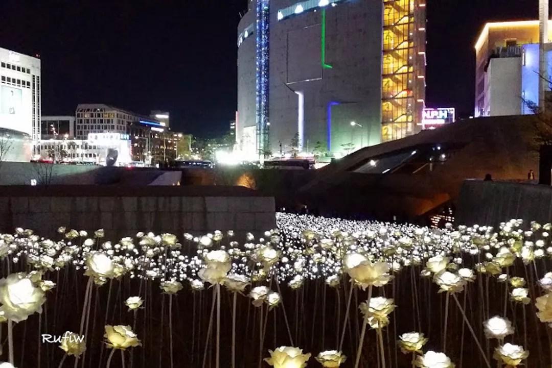 東大門設計廣場 동대문디자인플라자 LED玫瑰庭園展@Rufiw (11226) - 旅行酒吧
