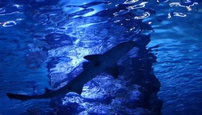 In_the_Antalya_Aquarium_14