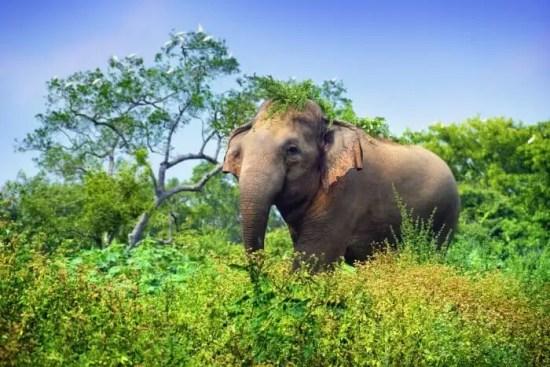 Image result for Udawalawe National Park