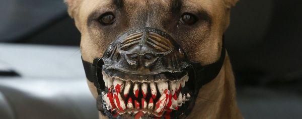 У Рівному зграя собак тероризує цілий район міста ...