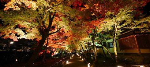 [自助旅行] 京都賞楓,嵐山寶嚴院,寶嚴院夜楓
