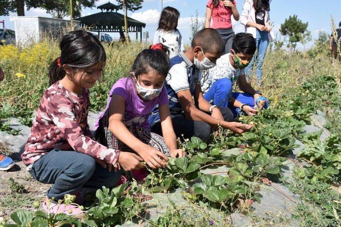 1601465657 647 karsli ogrenciler okul bahcesindeki serada organik sebze ve meyve uretiyor