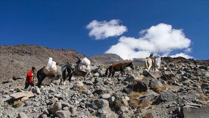 'Türkiye'nin Çatısı'na tırmanan dağcıların yükünü katırlar sırtlıyor