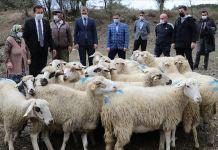 Koyunları kurt saldırısında telef olan aileyi Bakan Pakdemirli sevindirdi