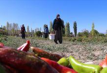 Komşu 14 girişimci kadının üretim başarısı