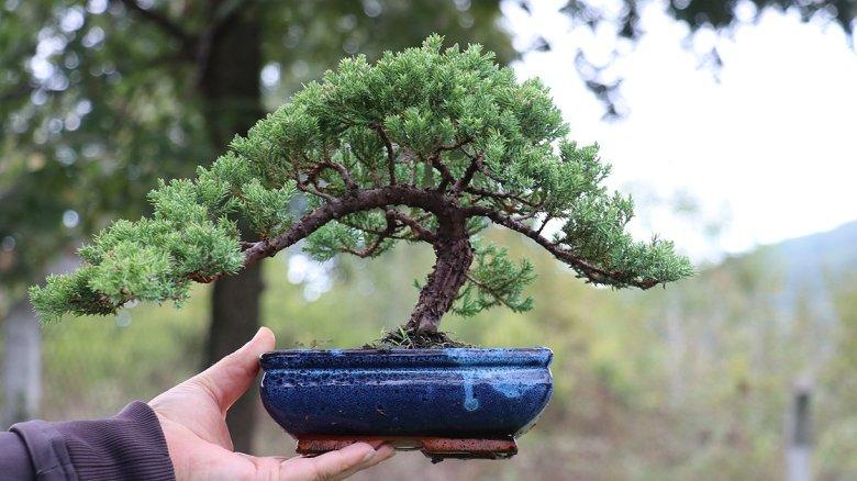 1603963317 793 bahcesinde sergiledigi yuzlerce bonsai ile muze kurmayi hedefliyor