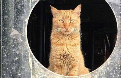 Salgın sürecinde kapalı kalan kafeterya sokak kedilerine yuva oldu