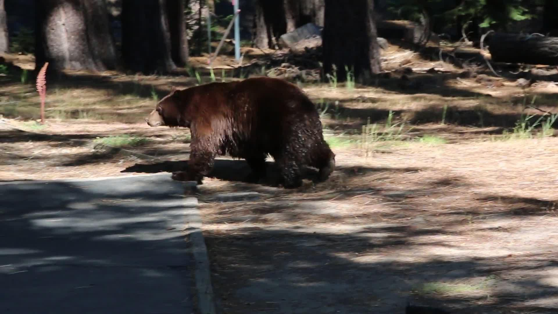 Black Bear Punched After Following 2 Year Old Into B C Home