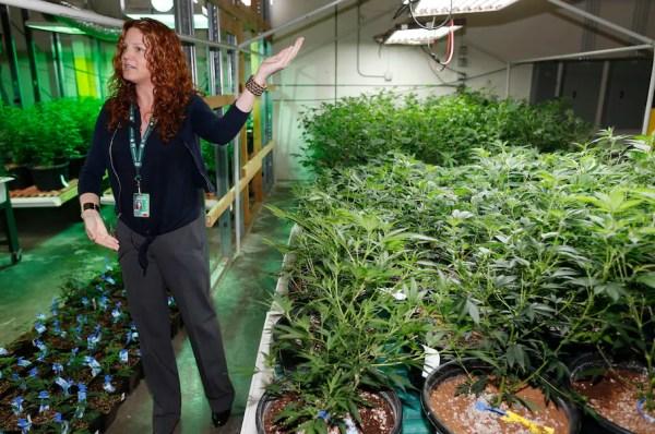 The government spent $18 million destroying marijuana ...
