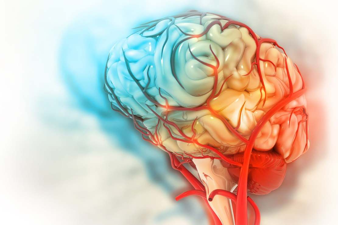 photo of medical illustration brain colorful