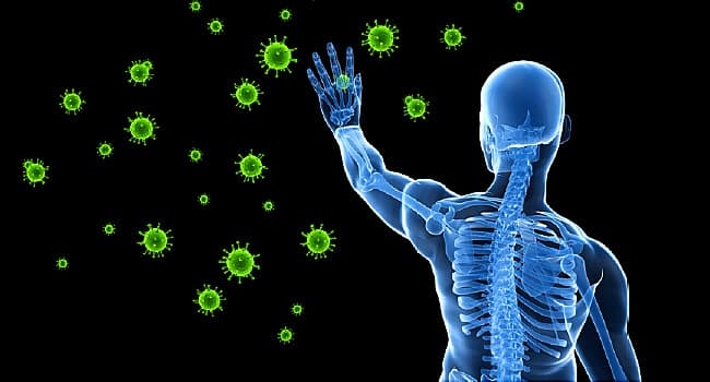The Human Immune System Explained