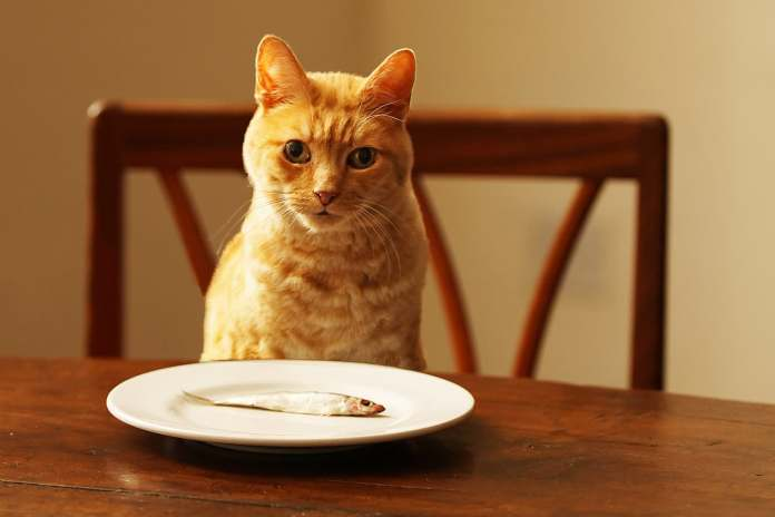 People Foods Your Cat Can Eat: Pictures