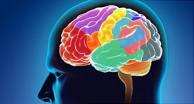 brain function sections