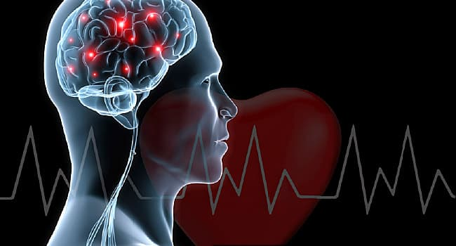brain and heart illustrations